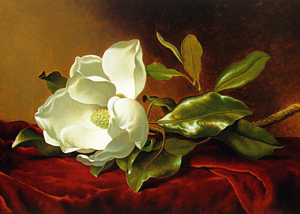 Martin Johnson Heade - Magnolia on Red Velvet