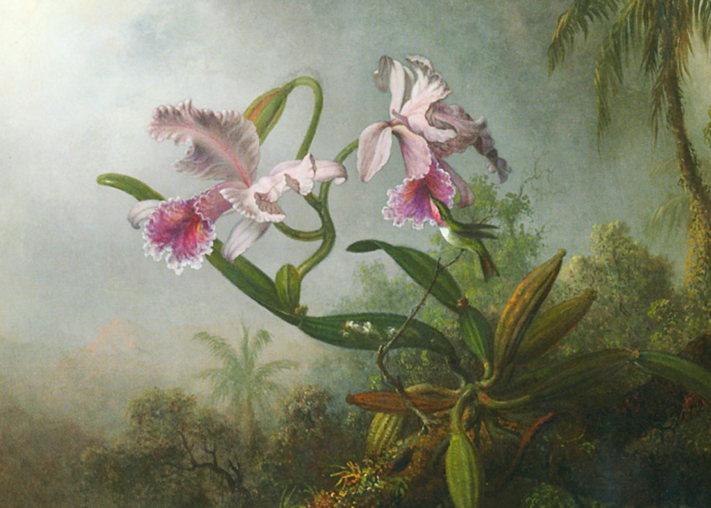 Martin Johnson Heade - Orchid and Hummingbirds